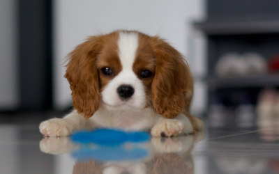 Worried About Puppy Health? Here's All You Need To Know