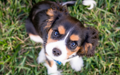 Total Puppy Care 1: Never Select A New Puppy Without The Following Considerations