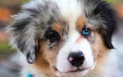 Puppy Daycare