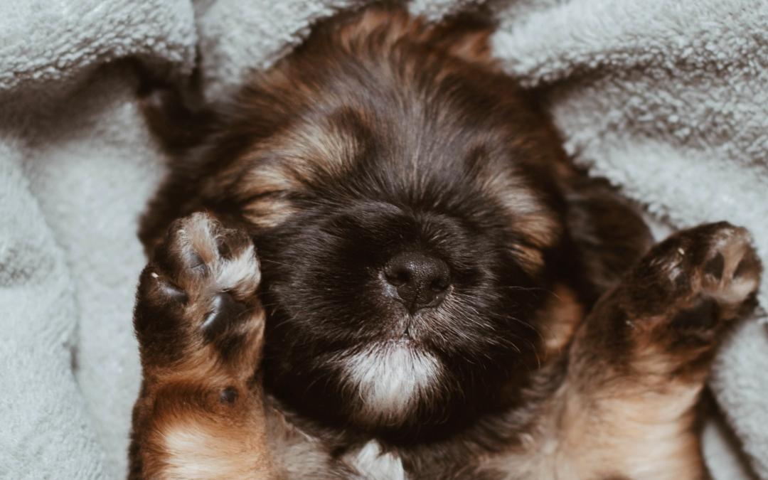 Puppy Potty Training Aids