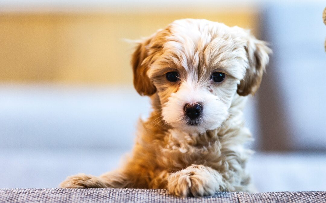 Show Your Pet a Tender Loving Puppy Care – Feed Him Organic Puppy Food